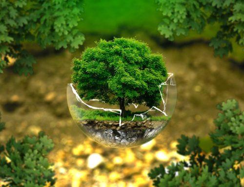Grand dossier : étang de Berre, un géant industriel aux portes d'un bijou écologique